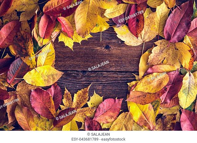 Frame from vivid colorful autumn leaves on a wooden desk, vintage seasonal background. Space for text