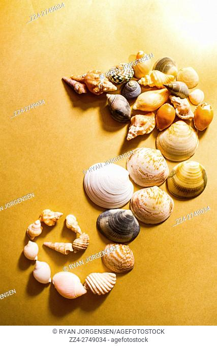 Creative still life composition with a gathering of sea shells combined to form the abstract appearance of a marine seahorse