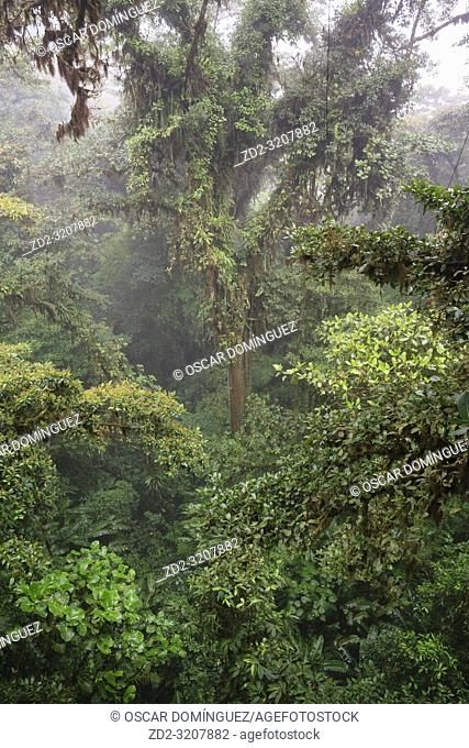 View of the forest canopy from above. Monteverde Cloud Forest Reserve. Costa Rica