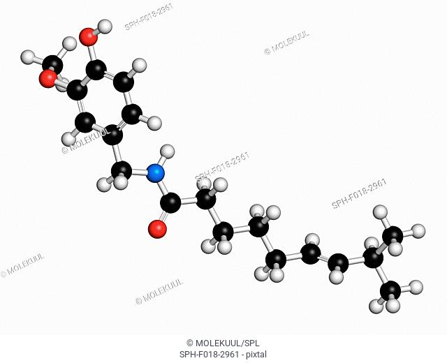 Capsaicin chili pepper molecule. Used in food, drugs, pepper spray, etc. Atoms are represented as spheres with conventional colour coding: hydrogen (white)