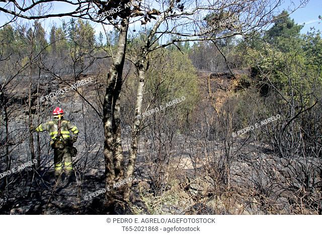 A look at the burned area squad in a forest of Galicia