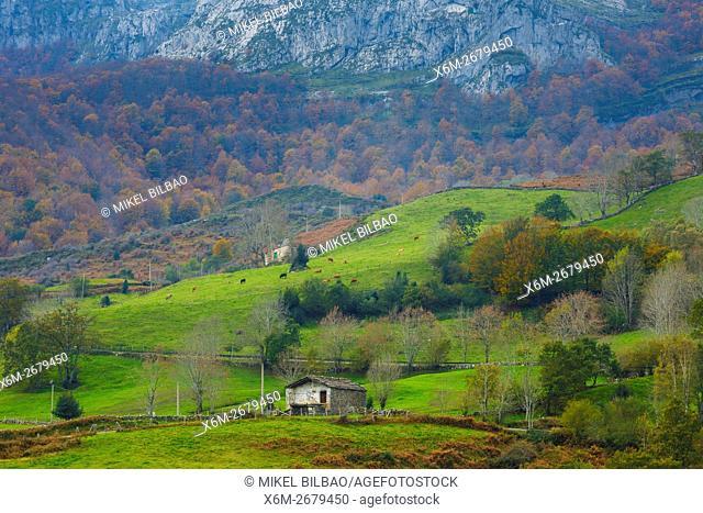 Beechwoods and meadows. La Sia mountain pass. Collados del Ason Natural Park. Cantabria, Spain