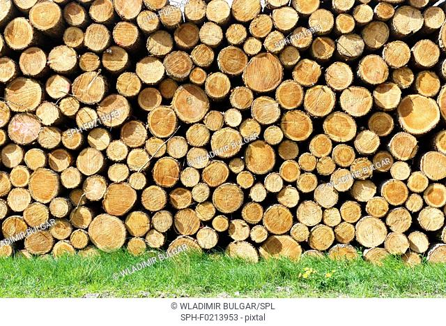 Woodpile on grass