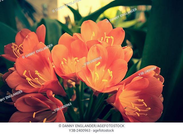 Vintage style orange flowers