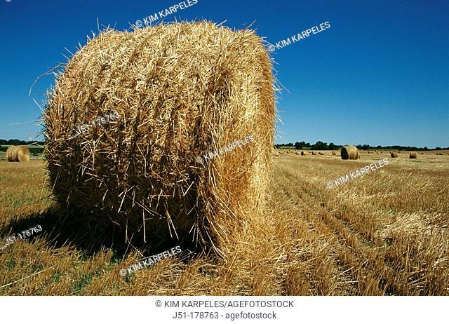 Straw in round bales. Wisconsin. USA