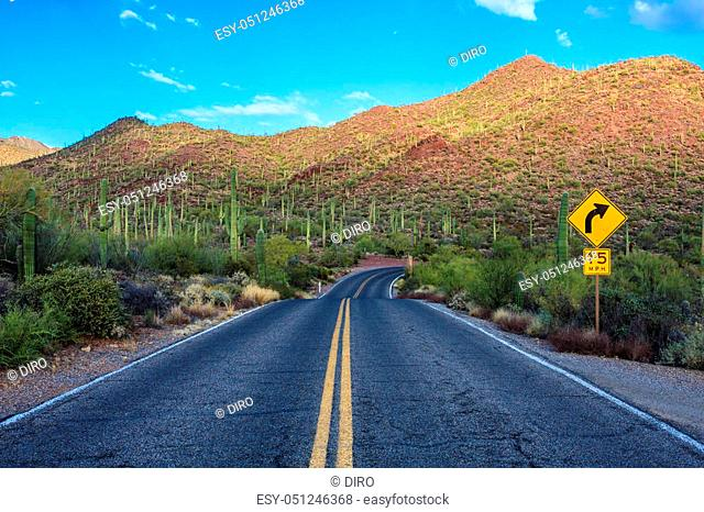 Amazing Image of Saguaro National Park
