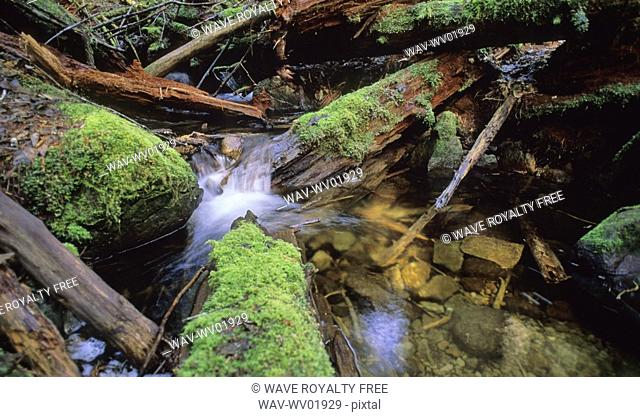 Stream highlighted by sunlight with mossy logs surrounding it, Squamish, BC Canada