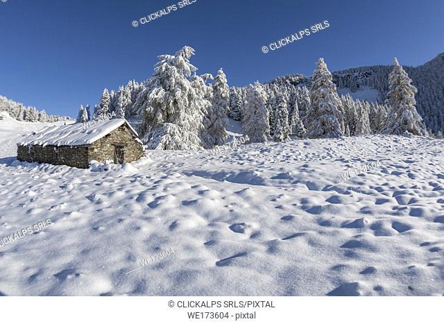 Snowy pasture, La Magdeleine, Aosta Valley, Italy