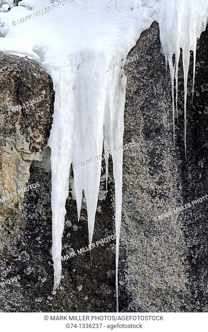 Winter Icicles Yellowstone National Park