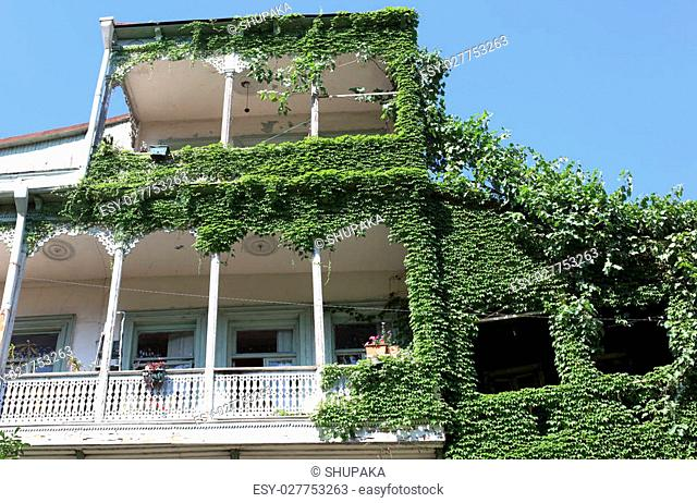 Traditional balconies of Tbilisi, Georgia covered with convolvulus