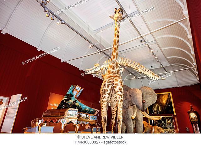England, Devon, Exeter, Royal Albert Memorial Museum and Art Gallery aka RAMM, Taxedermy of Wild Animals