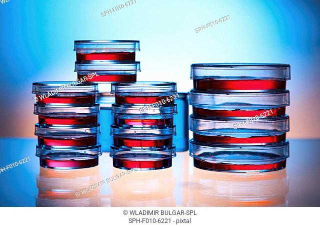 Petri dishes, studio shot