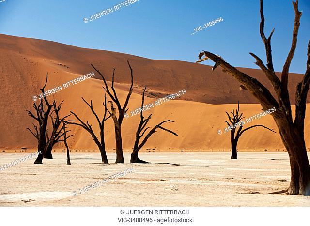 NAMIBIA, NAMIB-NAUKLUFT NATIONAL PARK, 21.02.2011, famous Deadvlei with dead trees, desert Landscape of Namib at Sossusvlei, Namib-Naukluft National Park