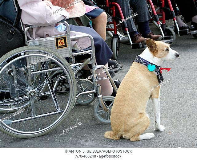 Senior people in wheelchairs with dog