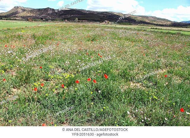 Blossom, Spring landscape, Rubielos de Mora, Gudar mountains, Teruel, Spain