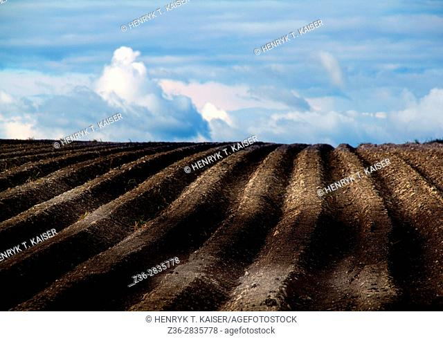 Agriculture in Lasser Poland
