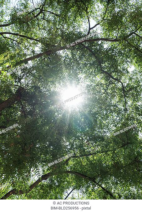 Sunbeams through branches of trees