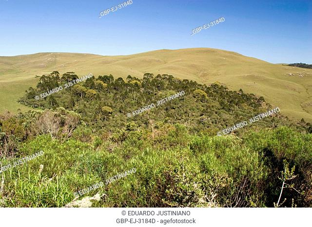 Physiognomy of Campos of Top with Forest of Araucaria and Herbs, São José dos Ausentes, Rio Grande do Sul, Brazil