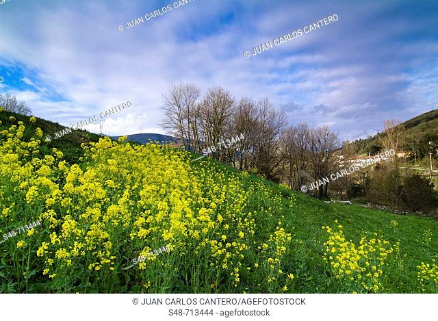 Ramales de la Victoria. Cantabria, Spain