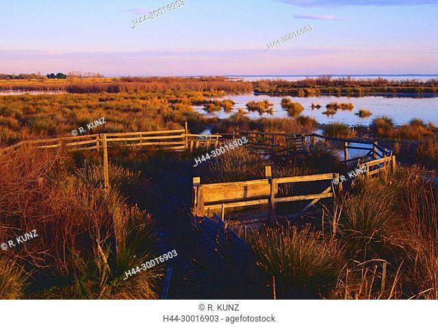 Bull enclosure, marsh, Etang de Vaccarès, lake, pond, Camargue, Bouches-du-Rhône department, Provence, France