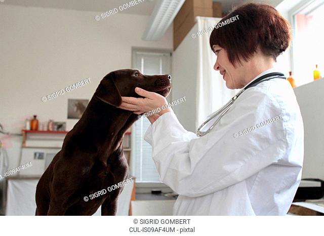 Female veterinarian examining dogs eyes in clinic