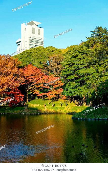 Koishikawa Korakuen Garden in Autum
