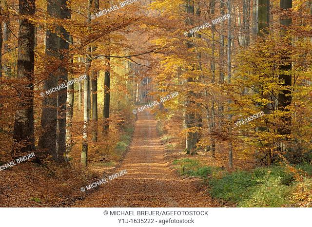 Path in forest, Spessart, Bavaria, Germany, Europe