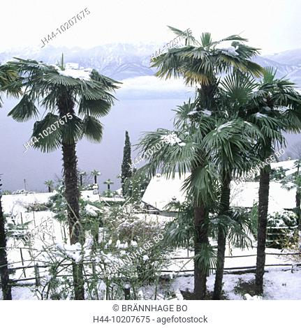 10207675, Ascona, Lago Maggiore, lake, sea, palms, Ronco, snow, Switzerland, Europe, Ticino, winter