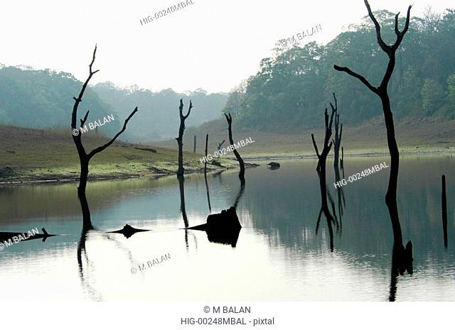 DEAD TREE STUMPS IN PERIYAR LAKE, THEKKADY