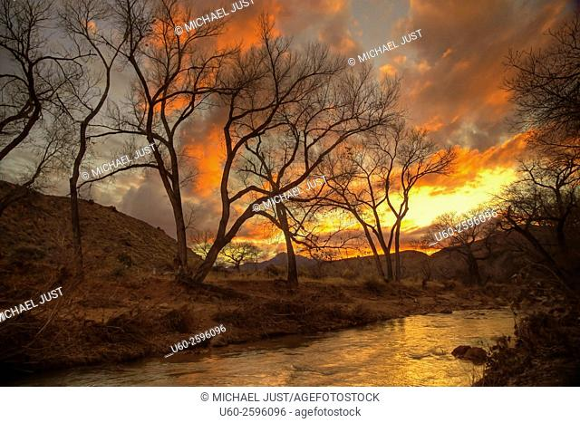Colorful clouds produced by a setting sun provide a background for leaveless Cottonwood Trees along the Virgin River at Zion National Park, Utah