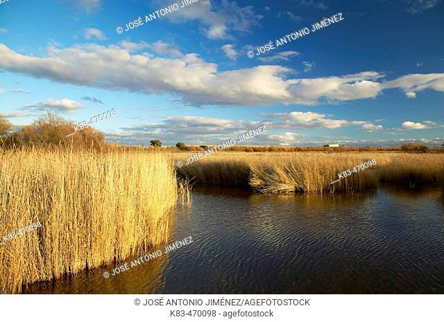 Tablas de Daimiel National Park in Ciudad Real province. Castilla-La Mancha, Spain