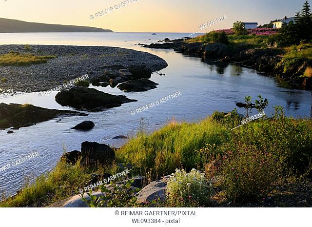 Wildflowers along Mobile River at sunset with a boat in the Bay on Avalon Peninsula Newfoundland