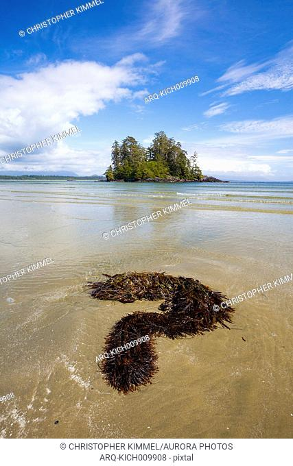 Seaweed Forms A Question Mark On Beach Near Tofino, British Columbia, Canada