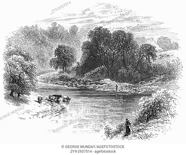 1870: Cattle drinking from the River Esk near Gilnockie, in Dumfries and Galloway, south-west Scotland