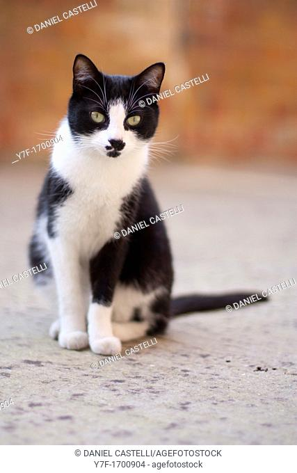 Black and white cat sit down