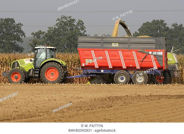 Indian corn, maize (Zea mays), maize harvest with tractor and trailer, Belgium