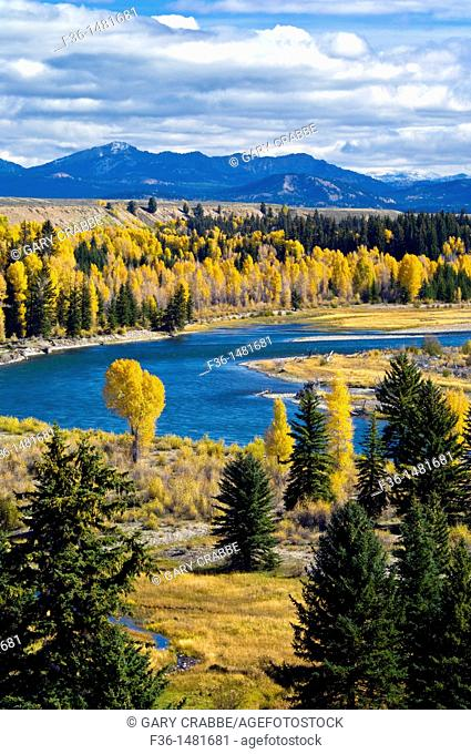 Fall colors on aspen and cottonwood trees along the Snake River, Grand Teton National Park, Wyoming