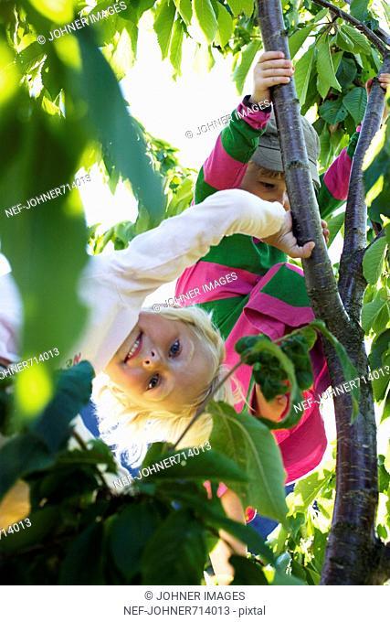 Girls climbing a tree, Sweden