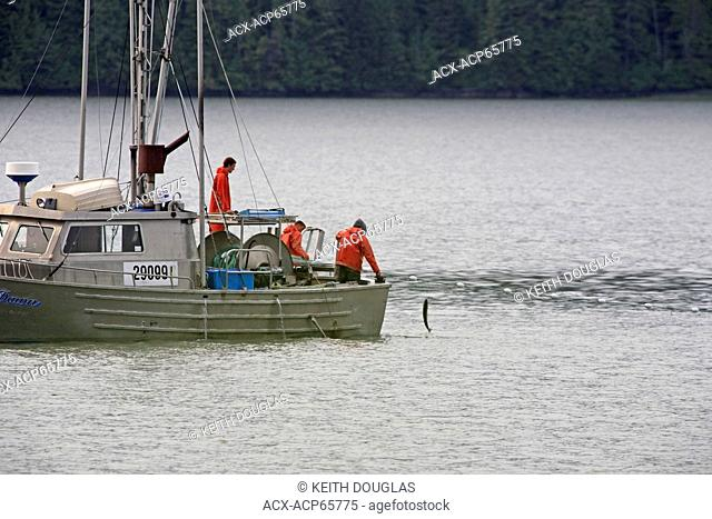 The Tyee Test Fishery gillnetter operating on the lower Skeena River, near prince Rupert, BC