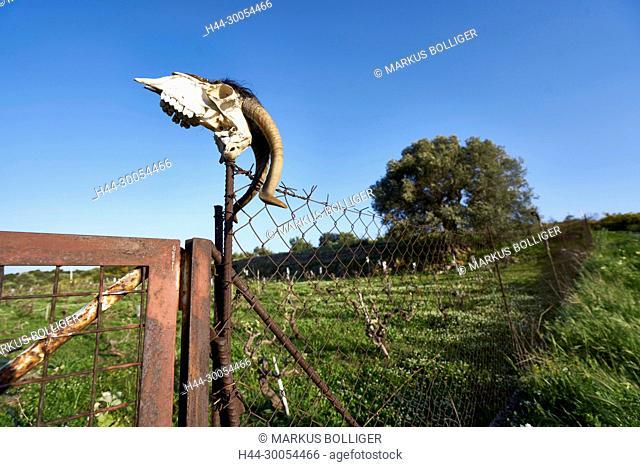 Greece, Crete, fence, skull, sheep, horn, horns, scenery, Schafschädel