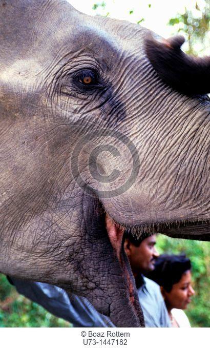 A beautiful smiling Asian elephant