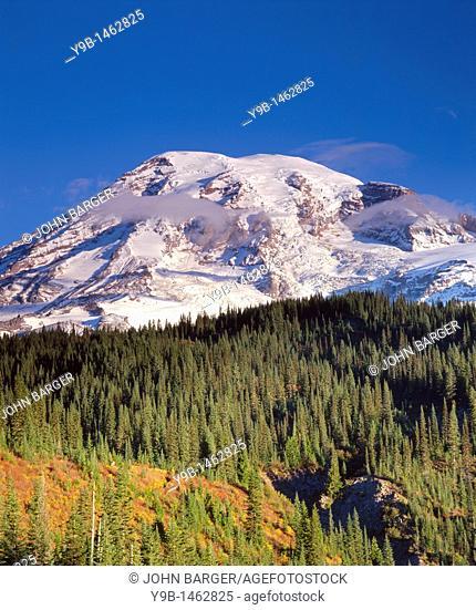 South side of Mt  Rainier towers above conifers and autumn shrubs, Mt  Rainier National Park, Washington, USA