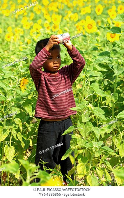 young boy flying his kite, sunflower field , sunflower fields of lopburi , central thailand