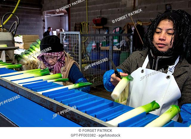 ASIAN WORKERS FOR THE WASHING AND PACKAGING OF LEEKS, (41) LOIR-ET-CHER, FRANCE
