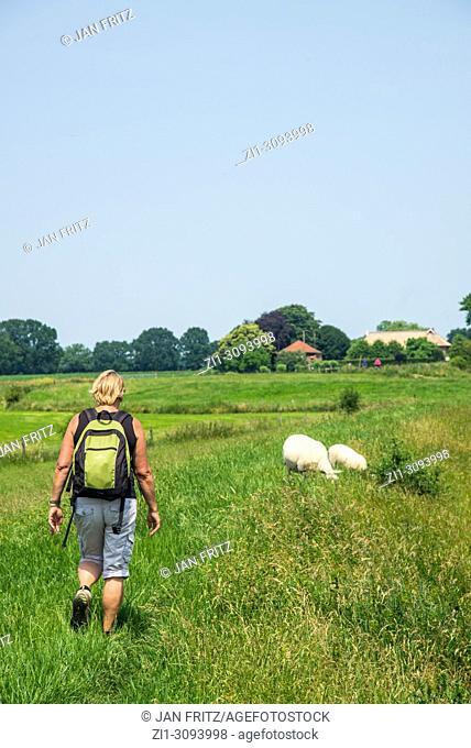 woman with backpack walking through countryside in the neighbourhood of Zutphen in Gelderland, Holland