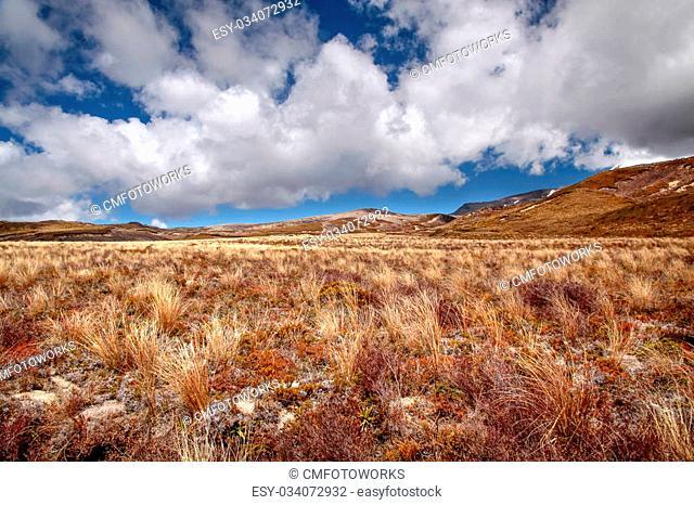 Meager landscape in the Tongariro National Park, Manawatu-Wanganui, New Zealand