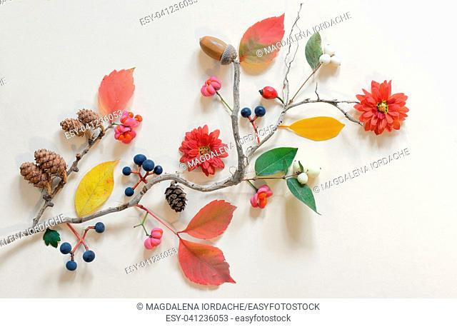 Autumn flat lay with various beautiful flowers and leaves