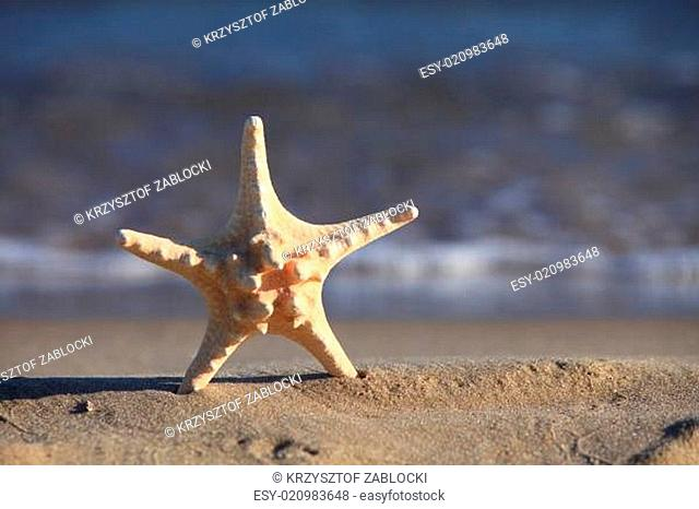 Starfish on beach at ocean background