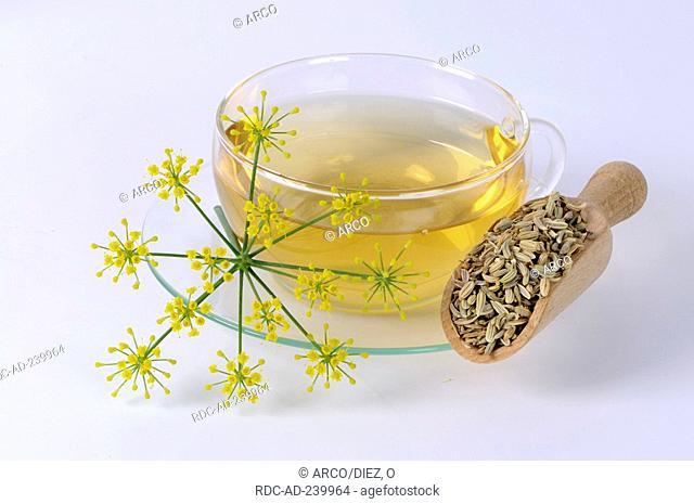 Cup of Fennel tea / Foeniculum vulgare