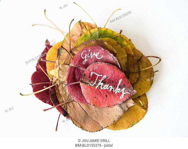 Give Thanks calligraphy on dry autumn leaves
